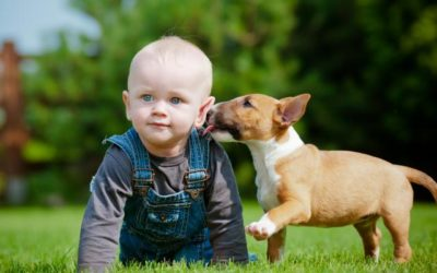 The Dangers of Dog Poop in Your lawn