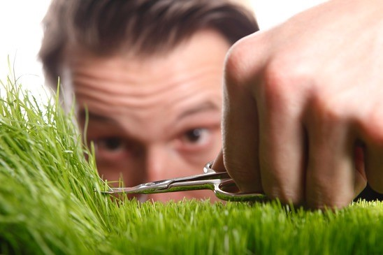 Top 4 Reasons to Hire a Professional Lawn Care Service